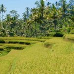 things to do in Indonesia