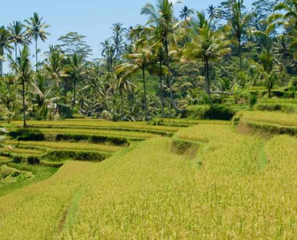 10 Adventurous Things to do in Indonesia